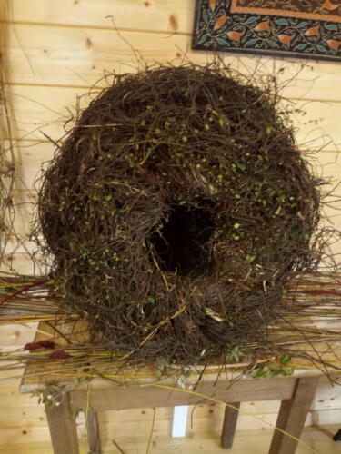 Nest woven from Muehlenbeckia